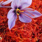 Những tác dụng thần thánh của Saffron đối với sức khỏe và sắc đẹp