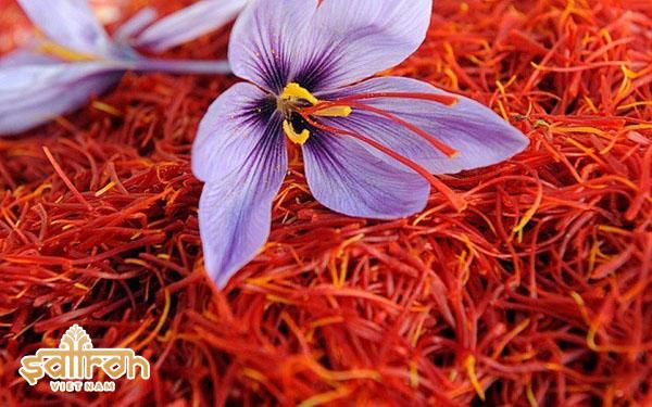 Vì sao giá nhụy hoa nghệ tây cao