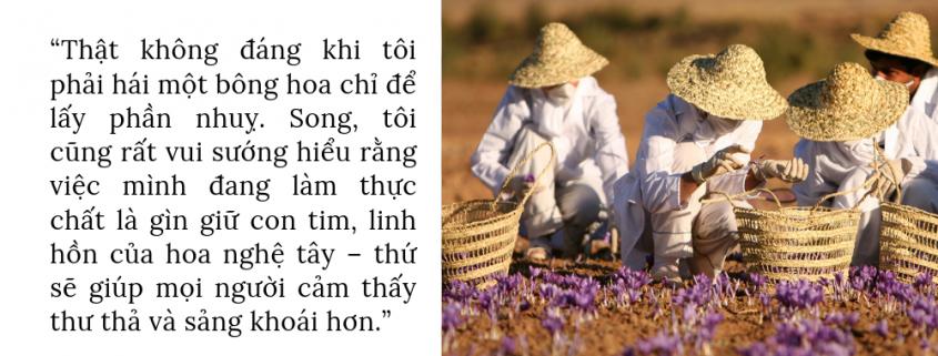 Tổng quang về saffron