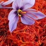 Cách bảo quản nhụy hoa nghệ tây Saffron