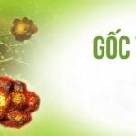 Crocin - Chất chống oxy hóa tự nhiên giúp đẩy lùi gốc tự do