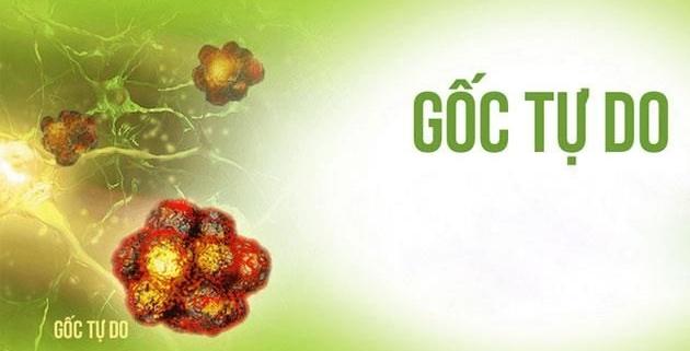 Crocin - Chất chống oxy hóa tự nhiên