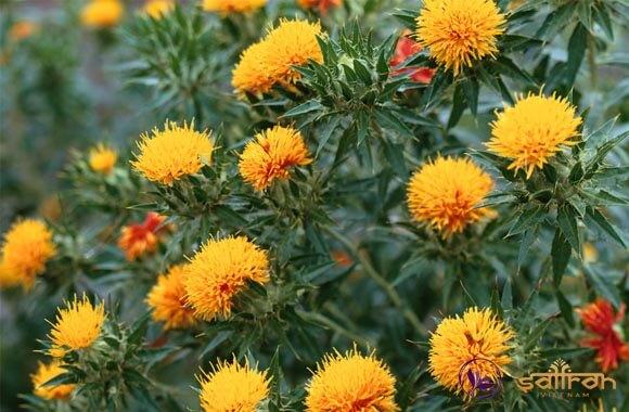 nhuy hoa hong