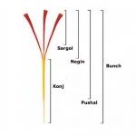 Saffron cao cấp - Top 5 tiêu chí đánh giá Saffron
