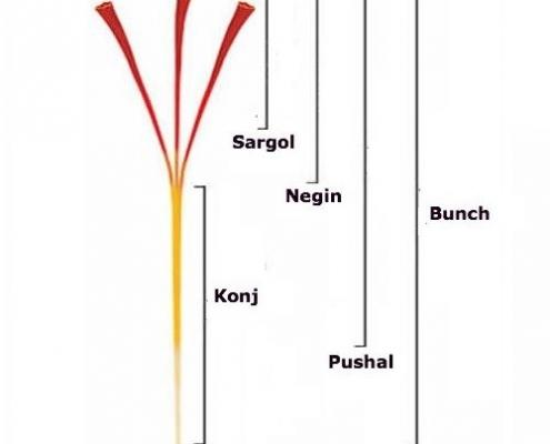 saffron cao cap 2