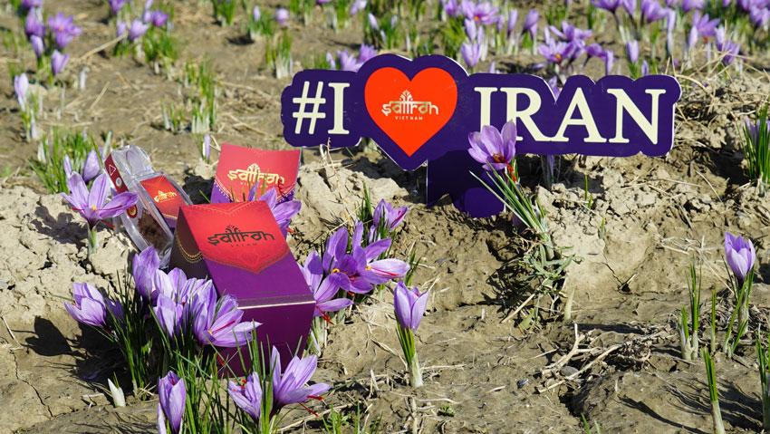 N棚n l畛� ch畛� saffron 畉� �畛�hay saffron Iran?