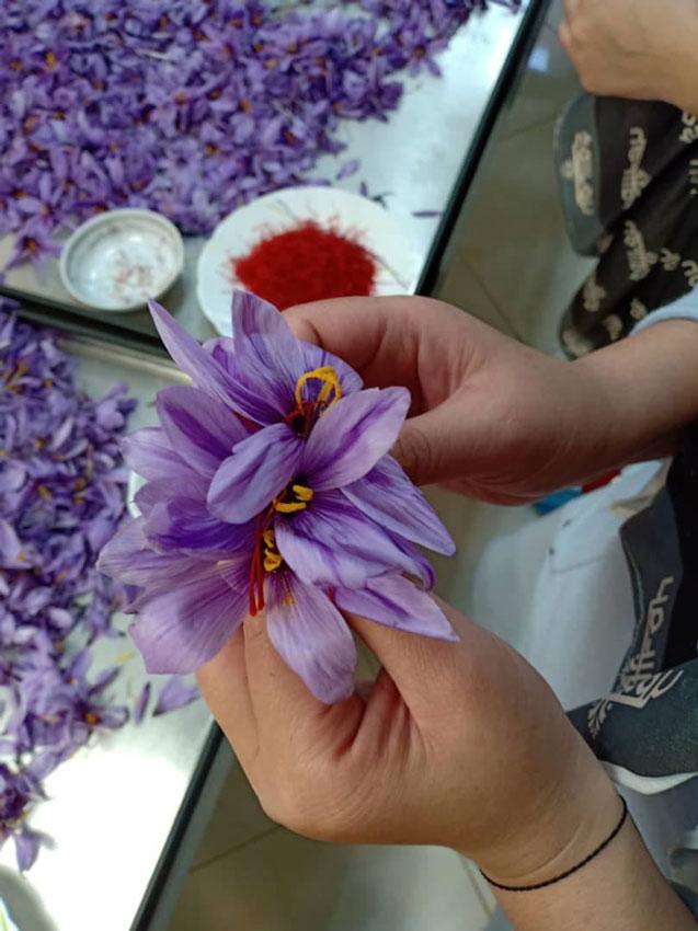 Mai Thảo Mộc Mix Saffron là gì?