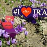 Negin Saffron Iran nhụy hoa nghệ tây cao cấp
