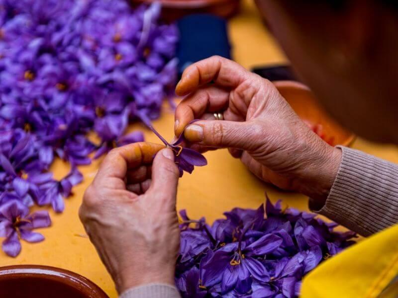 Nhụy hoa nghệ tây Kashmir Ấn Độ
