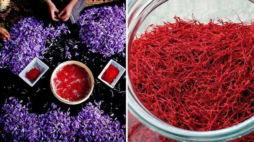 Ngu畛� g畛� c畛� saffron