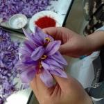 Safon, safaron hay saffron? Cách viết nào đúng? Chúng là gì?