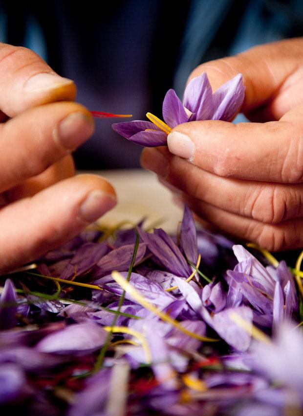 5. Saffron có tác dụng hỗ trợ phòng chống ung thư