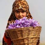 Cận cảnh thu hoạch saffron cao cấp nhất thế giới tại thánh địa Mashhad Iran