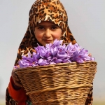 C畉� c畉�h thu ho畉�h saffron cao c畉� nh畉� th畉�gi畛� t畉� th叩nh �畛� Mashhad Iran