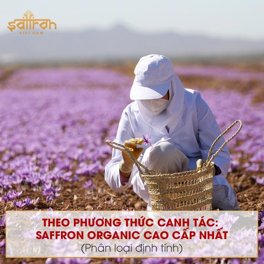 C叩c lo畉� saffron hi畛� nay